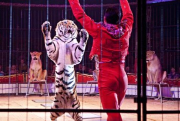 cirque-tigres.jpg